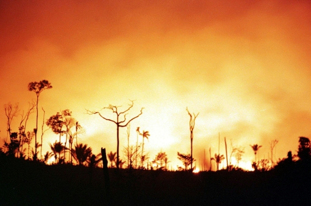 Amazzonia.jpg
